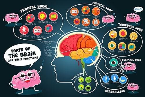 Brain-fucntions