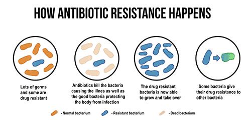 probiotics-antibiotic